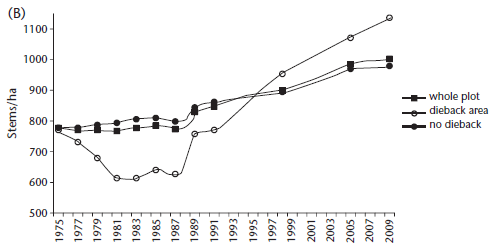 Figure 5.18 (B): Change in stem number at the Garrawalt permanent plot between 1975 and 2009, showing the impact of dieback disease on plot structure, and subsequent recovery.