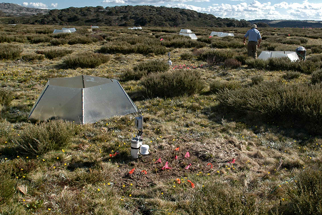 International Tundra Experiment Plot © 2011 Henrik Wahren